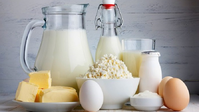 Особенности ухода: чем кормить хаски в домашних условиях