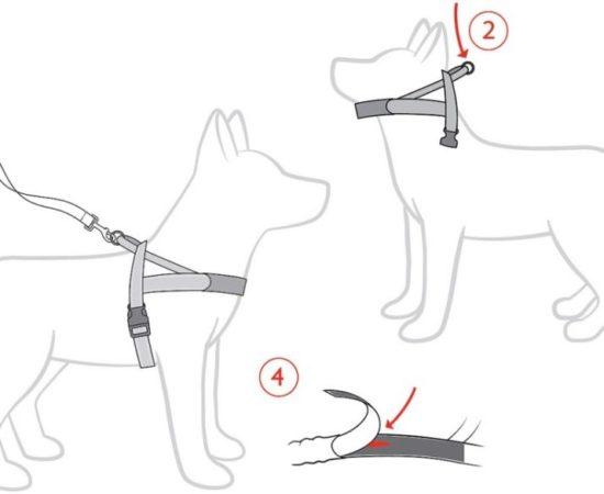 Как выбрать шлейку и ошейник для хаски