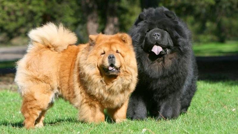 Какая порода собак по знаку зодиака подойдет именно вам
