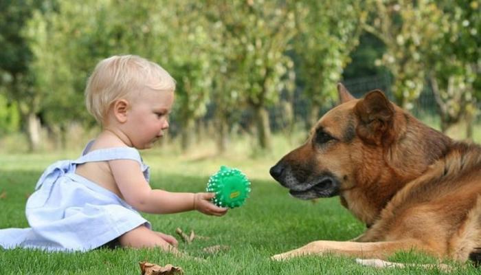Рассказываем как уговорить родителей купить собаку