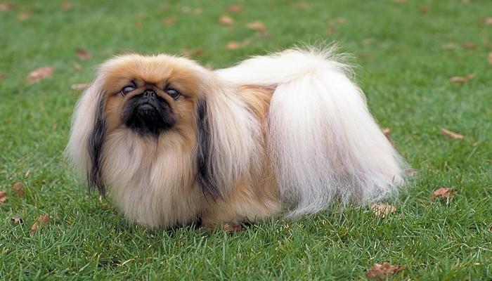 Обзор самых милых пород собак