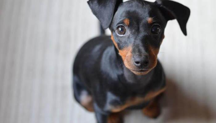 Красивые клички для собаки мальчика маленькой породы