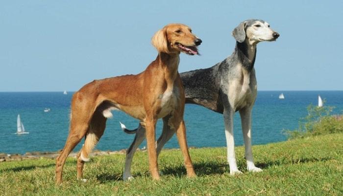 Самые красивые клички для охотничьих собак