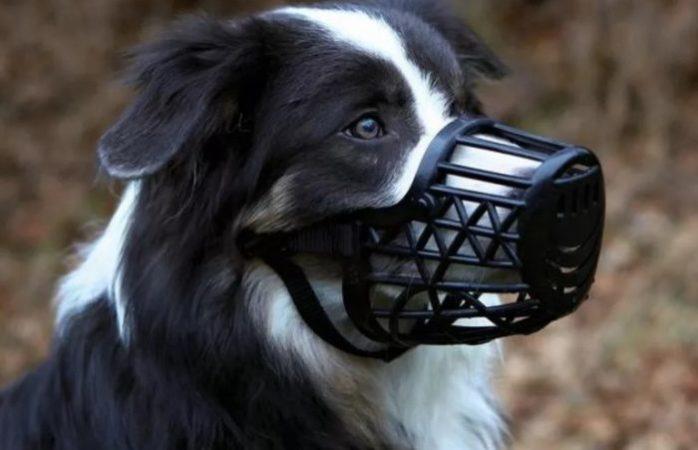 Главные методы: как отучить собаку лаять в квартире
