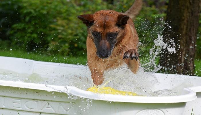 Выясняем, как часто можно мыть собак
